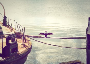 seabird